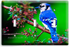 BLUE JAY NORTH AMERICAN BIRD ON A TREE LIGHT SWITCH OUTLET WALL PLATE ROOM DECOR