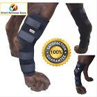 Dog Knee Hock Brace For Dogs Ankle Rehab Rear Leg Protector 4 Straps By Labra, used for sale  Shepherdsville