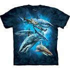 Shark Collage Aquatics T Shirt Child Unisex The Mountain