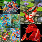 DIY Diamond Painting Full Round Drill Diamond Embroidery Lotus And Luck Koi Fish