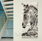 Portrait Of Zebra Modern Decor Wall Clock Canvas Print Set Of 3 In Color Or B&W