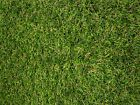 *30mm Top Quality Astro Artificial Grass Fake Lawn Garden Turf - Majestic