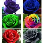 50 Rose Seeds Blue Red Purple Green Black Rainbow Petal Plant Home Garden Flower
