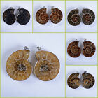 30-41mm Two matching ammonite fossil twins pendant *each pair photoed*