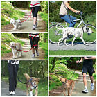 Hands Free Dog Lead Jogging Cycling Bicycle Running Lead Lots Of Choice
