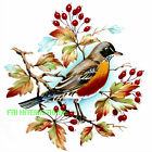 B149 ~ American Red Robin Ceramic Decals, 4 Sizes to choose from, Bird, Berries image