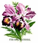 F14 ~ Iris colored Cattleya Orchid, on Ceramic Decals, 2 sizes to choose from image