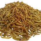 Mealworms--Freeze Dried, Koi & Pond Fish, Large Fish,Turtles, Birds & Reptiles