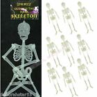 Hanging Glow in the Dark Skeleton 32cm Halloween Party Table Decoration Lot 1-10