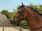 Windsor Equestrian Horses Leather Bridle with Flash Noseband and Reins included