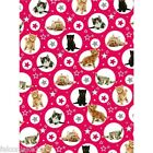Twinkle kittens gift wrap Birthdays,christmas,wrapping paper,cats,kitten