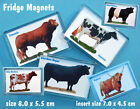 CATTLE FRIDGE MAGNETS 30 BREEDS