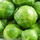 Brussels Sprouts Long Island Improved Seeds Non GMO Excellent Eating Quality