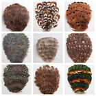 Внешний вид - PHEASANT Feather PADS Many Types & Colors (Headband/Hats/Halloween/Costumes)