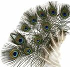 """PEACOCK FEATHERS 10''-55"""" Beautiful Natural Eyes 10-200 Pcs (Halloween/Costume)"""
