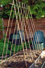 6Ft Natural Wooden Bamboo Canes Plant Support Garden Thick Canes Sticks New