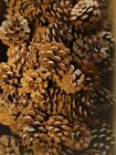 75 PINE CONES RED PINE TREE  (NO GRAYS) 1.5 - 3 INCHES CRAFTS WREATHS WEDDINGS