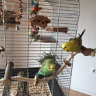 Pet Bird Parrot Wooden Rope Climbing Hanging Cage Ladder Stand Perch Chew Toy No