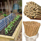 Strong Heavy Duty Professional Bamboo Plant Support Garden Canes 2 3.4 5 6.7 8ft