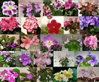 African Violet *Standard/Large* YOU PICK 2 Leaves Unrooted Leaf Sets Pairs