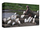 Animal Canvas Prints Hippos and Birds Wall Art Picture