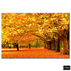 Landscapes Autumn Trees   BOX FRAMED CANVAS ART Picture HDR 280gsm