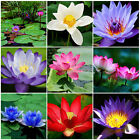 Beautiful Lotus Flower Seeds, Aquatic Plants Bowl Lotus Water Lily Seeds 10pcs