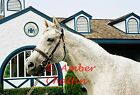 COLOR PHOTO - 8x10 Holy Bull  at Jonabell Farm - 1994 Horse of The Year (3) 2009