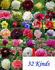 Hot Sell Flower China's Peony Seeds Paeonia suffruticosa Tree DIY Garden