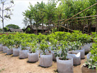 Round Fabric Pots Plant Pouch Root Container Grow Bag Aeration Gar