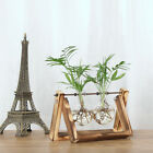 Hydroponic Plant Transparent Vase Wooden Frame Coffee Shop Home Room Decoration