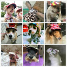 New Dog's Hat Baseball Cap Windproof Travel Sports Sun Hats For Puppy Large Hats