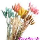 20pcs Home Decor Props Rabbit Tail Grass Bunny Tails Dried Flowers Bouquets