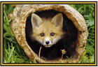 Fox Photographs  - New - Fridge magnets - .