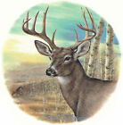 Ceramic Decals Buck Deer Forest Scene Style B image