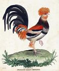 3415.Chicken Hen Rooster Le Coq Hupe POSTER.Home Room Science School Art decor