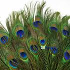 Real Natural Peacock Tail Eye Feathers 9-12 Inches 50pcs 100pcs 150pcs 200pcs BS