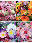 2014 POCKET DIARY - Flowers/Gardenining - Two Weeks to View (Tallon 36199)