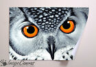 SNOWY OWL EYES GIANT WALL ART POSTER A0 A1 A2 A3