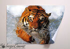 BENGAL TIGER GIANT WALL ART POSTER A0 A1 A2 A3