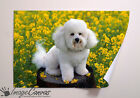 POODLE GIANT WALL ART POSTER A0 A1 A2 A3