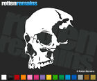 "Skull Decal 6""x4.8"" Death Skulls Skeleton Vinyl Car Truck Window Sticker V2 SCO"
