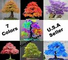 bonsai tree clipart - 20 Japanese Maple Tree Bonsai Seeds Acer Palmatum Red Blue Purple Green Yellow
