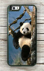 PANDA BEAR ON TREE CASE FOR iPHONE 8 or 8 PLUS -fgt5Z