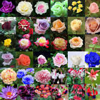 Various Flower Rose Seeds Ideal Garden Potted Seed Rare Plant Ornamental Decor