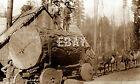 1890'S LOGGING CREW HAULING ONE HUGE LOG BY HORSE & WAGON CLIPPER MILLS CA PHOTO