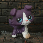 Littlest Pet Ship(1033)- Cute Purple And White Collie Dog #1676 w Blue Eyes lps