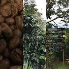 Coffee Beans 1Kg 2kg 5kg Rare Single Origin Finca Santa Lucia Costa Rica