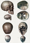 ML12 Vintage 1800's Medical Human Adult Infant Child Skull Poster RePrint A4