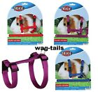 Guinea Pig Harness And Lead Set Walk Training New Red Blue Purple Green Black
